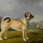 1890 pug Henry_Bernard_Chalon_-_A_favorite_pug_(1802)
